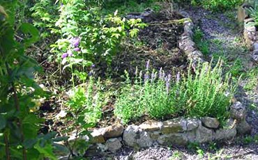 Patch of medieval herb garden.