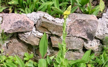 Garden walls made of natural stones.